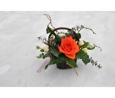 Arajament floral AR41